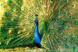 Fototapeta tło - dziób - Ptak