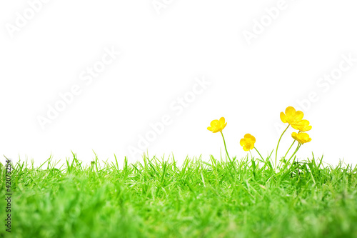 Buttercups isolated on white