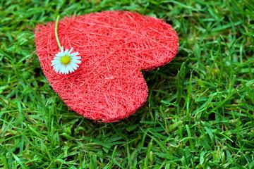 Herz auf gras mit Gänseblümche