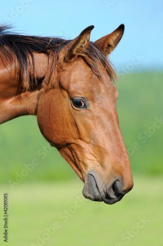 Fototapeten,pferd,natur,equine,reiten