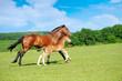 Fototapeten,pferd,natur,einhufer,reiter