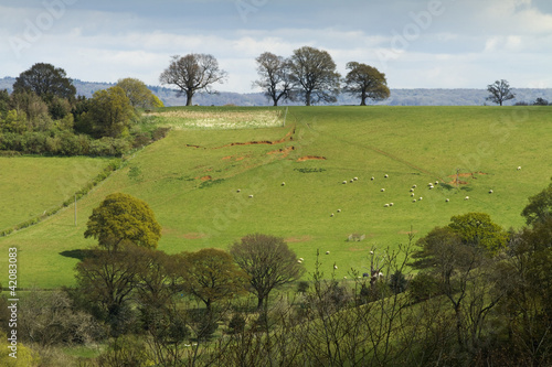 English landscape of fields and trees on a hill