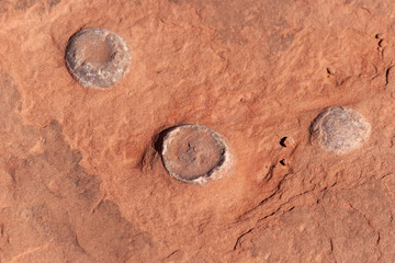 Dinosaur Egg Fossil