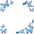 frame of blue butterfly