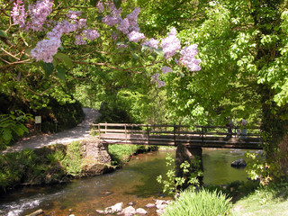 East Lyn river near Watersmeet, Exmoor