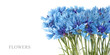 canvas print picture - Blue cornflower flowers bouquet in vase isolated