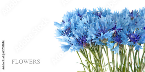 canvas print picture Blue cornflower flowers bouquet in vase isolated