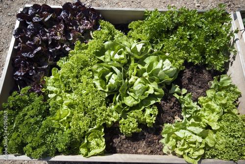 Parsley and salad