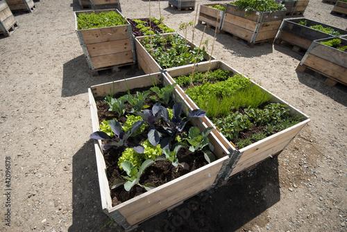 Raised garden beds all over