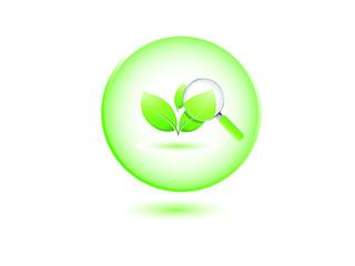 Plante écologique à la loupe
