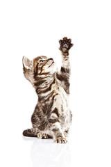 Kleine getiegerte Katze mit ausgestreckter Tatze