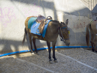 Donkey Transport in Fira Santorini Greece