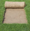 Grass Carpet Cover