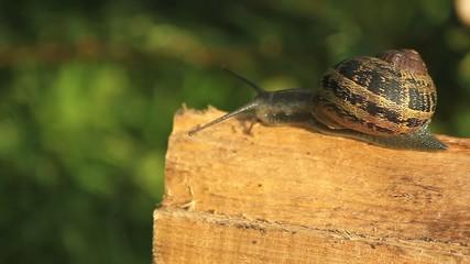 Escargot sur un morceau de bois