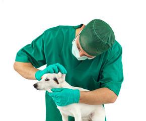 Visita veterinaria alle orecchie