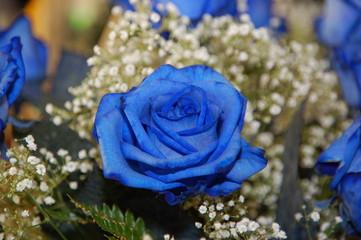 rosa o rose blu per te!!