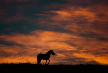 sunset landscape with horse and beautiful warm colors