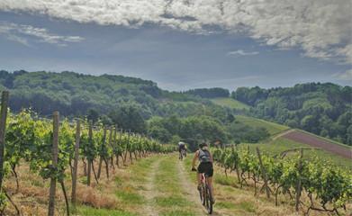 Mountainbiken im Schwarzwald