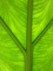 grüne Gabelung