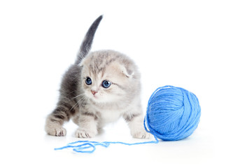 british baby cat playing clew or ball on white