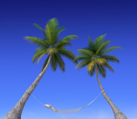 Hammock hanging from palm trees