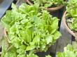 bowl of fresh organic salad on display
