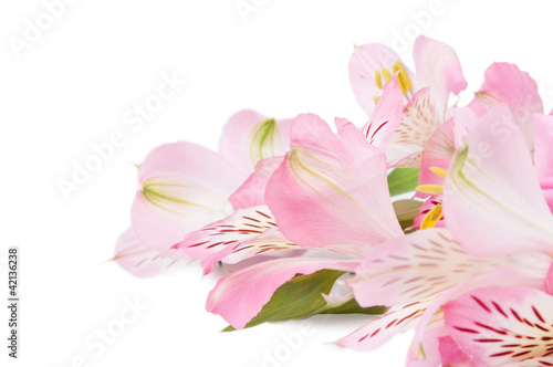 Fototapeten,blume,floral,rosa,orchidee