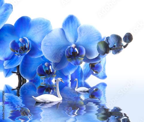 Fototapeten,paar,fröhlichkeit,blume,orchidee