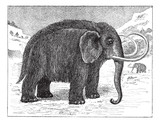Mammoth or Mammuthus sp., vintage engraving