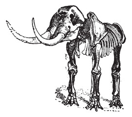 Mastodon or Mammut sp., vintage engraving