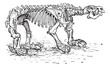 Megatheriid Ground Sloth or Megatherium sp., vintage engraving