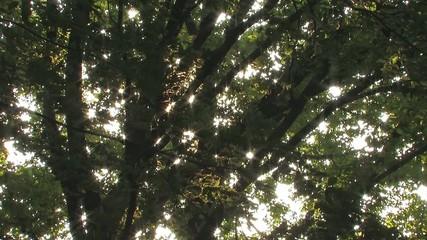 Summer Trees in Takanodai Park,Tokyo,Japan