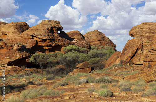 Tuinposter Canyon stone landscape in desert and tree