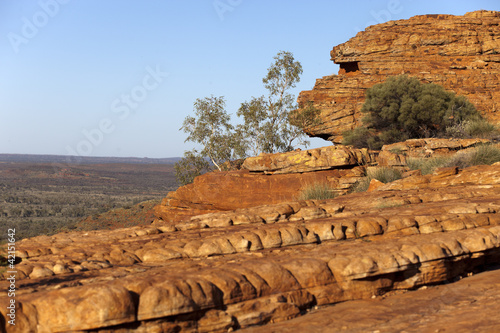 stone landscape in desert and tree