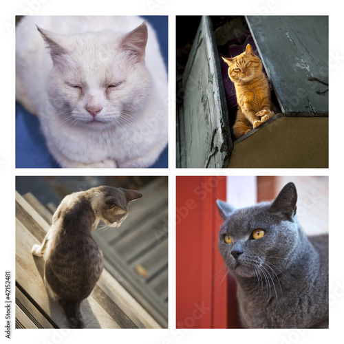 Chat, animal, félin, animal de compagnie, poil, attente