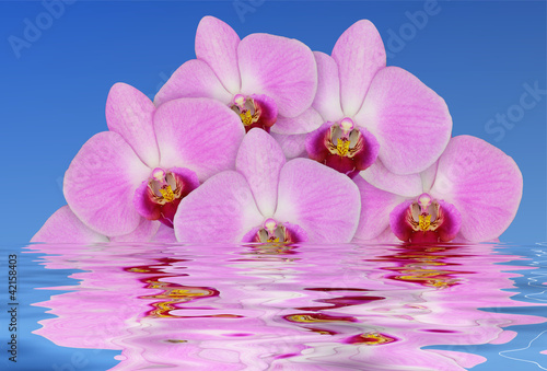Fototapeten,orchidee,blume,leuchtend,bunt