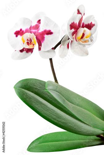 Fototapeten,orchidee,hintergrund,schön,schönheit