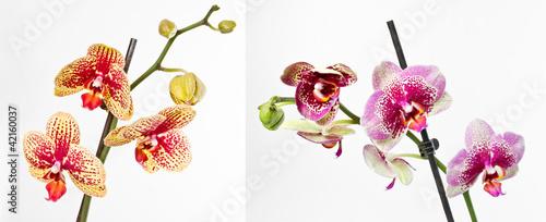 Fototapeten,garten,anbauend,lagerbelüftung,garten-ringelblume