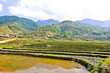 Landscape of rice crops in Sapa, Vietnam
