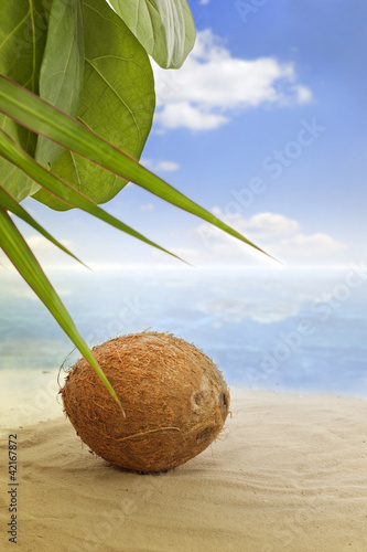 coconut on the beach and sea