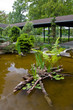 Asiatic garden
