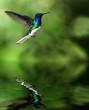 canvas print picture - Kolibri über Wasser