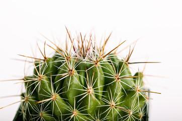 Stacheliger Kaktus in Blumentopf.