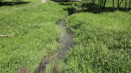 Stream among green grass