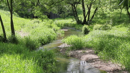 Stream among green grass