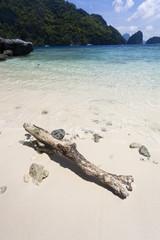 Driftwood on white sand beach