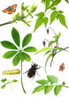 Collection of green leaves and insects