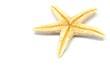 sea-star
