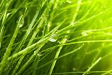 Green grass - 42189843