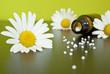 Verstreute Globuli mit Kamillenblüten vor grünem Hintergrund